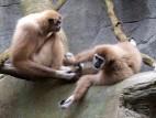 Affenfreundschaft